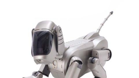 Po 12 rokoch bude prvým robotickým projektom Sony nový robo pes