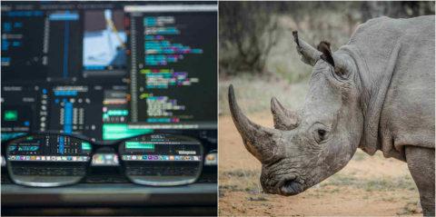 Internet of Things pomáha vboji spytliakmi loviacich nosorožce